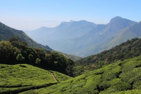 Teeplantagen in der Naehe von Munnar