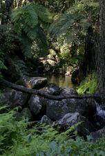 Kleiner Bach auf dem Zomba Plateau, Malawi