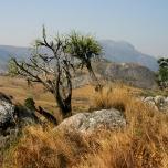 Faszinierende Natur gibt es hier... Mulanje Massiv, Malawi