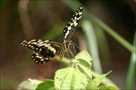 Herrliche Schmetterlinge findet man hier.