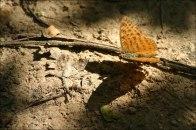 Schmetterlinge ueberall